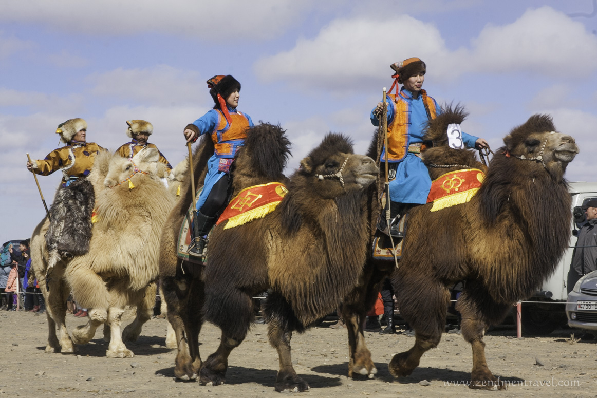 Mongolian-herdsmen-marches-for-the-camel